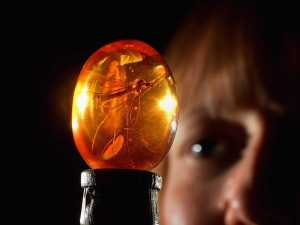 new-study-drives-a-nail-in-the-jurassic-park-coffin-amber-preserved-insects-dont-have-dna